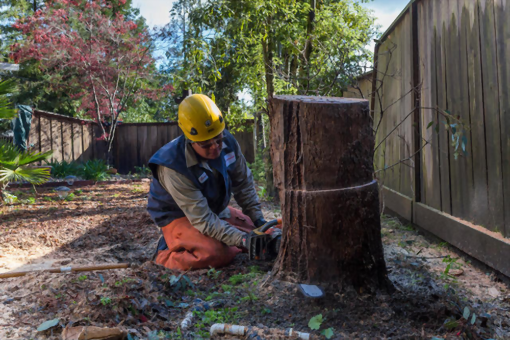 Budget-friendly And Professional Stump Grinding in Windsor