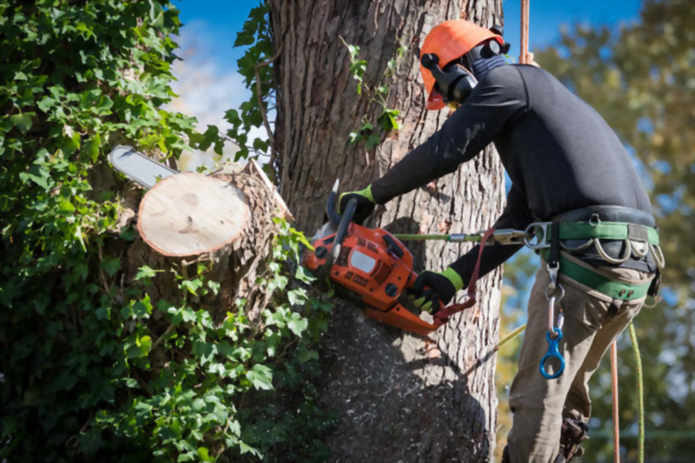 Use a Stump Grinder to Remove Tree Stumps