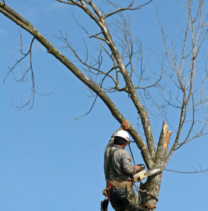 What is Involved in Tree Removal?