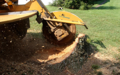 Stump Removal – How to Get Rid of the Hardest to Get Stumps