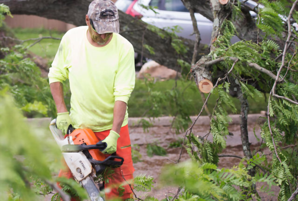 Get Professional Tree Removal Windsor Ontario